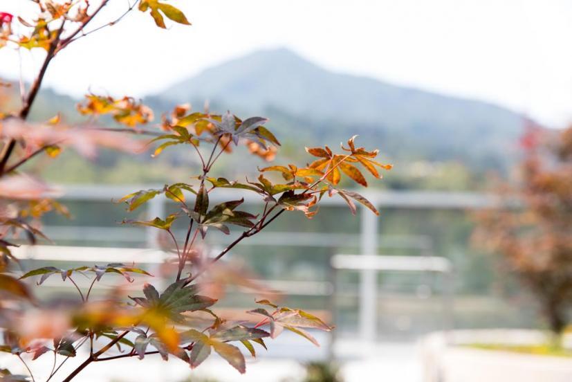 MarinHealth view of Mt. Tam