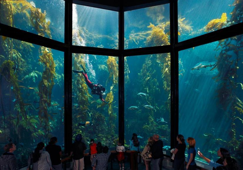Family Road Trip To The Monterey Bay Aquarium Marin Mommies