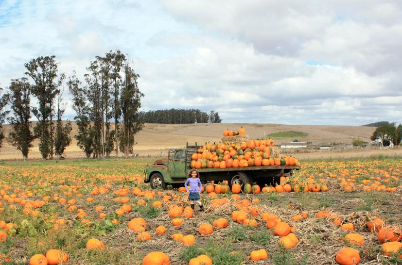 The Ultimate Guide to Halloween Pumpkin Patches in Marin and