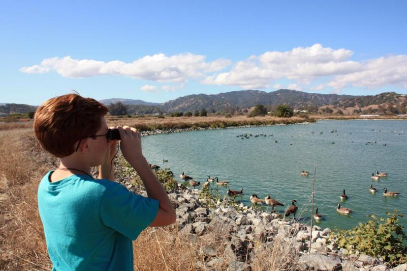Las Gallinas Wildlife Ponds