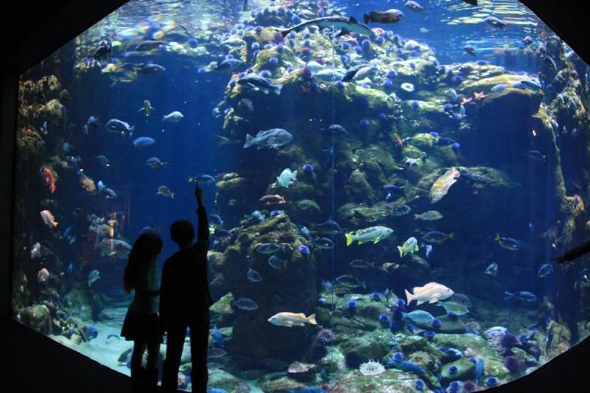 Steinhart Aquarium coral reef san francisco