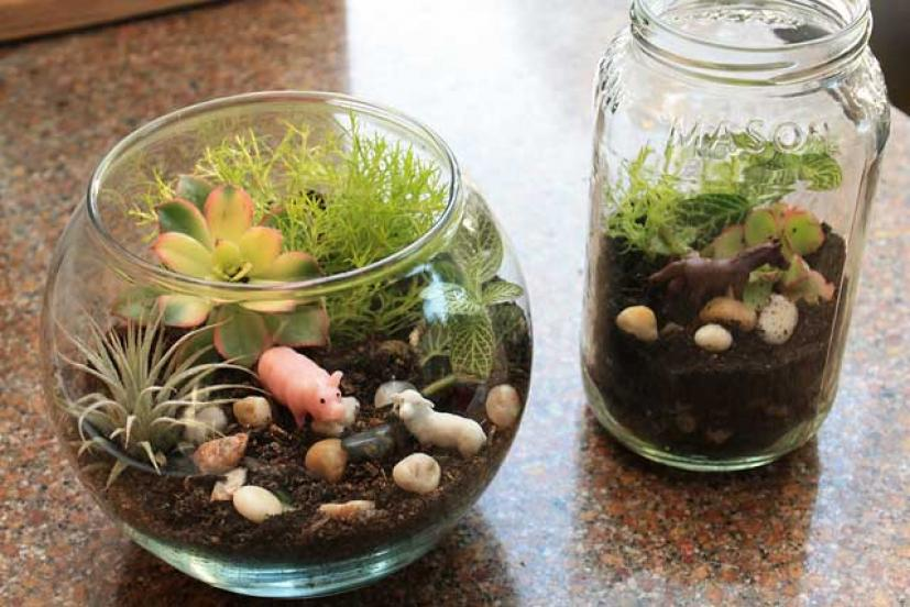 Earth Day Craft For Kids Make A Mini Terrarium Marin Mommies