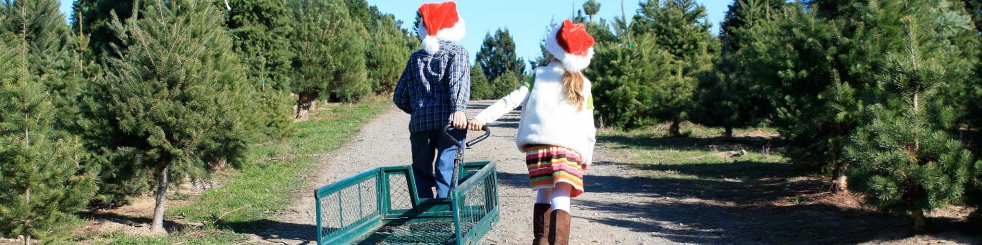 Marin Holiday Guide - kids at Christmas Tree Farm