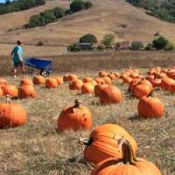 Nicasio Valley Pumpkin Patch