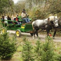 Holidays Along The Farm Trails 2019