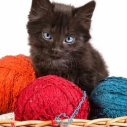 Knitty Gritty Crochet & Knitting Club at Belvedere Tiburon Library