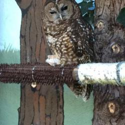 Owl from Wildcare