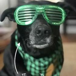 Patrick the dog
