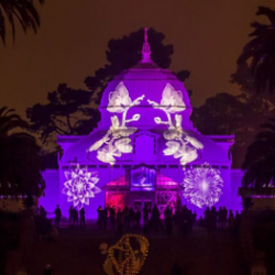 Night Bloom–Conservatory of Flowers, San Francisco