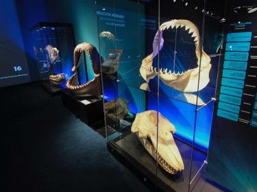 gallery with shark jaw display