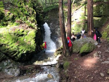 Cascade Falls Mill Valley