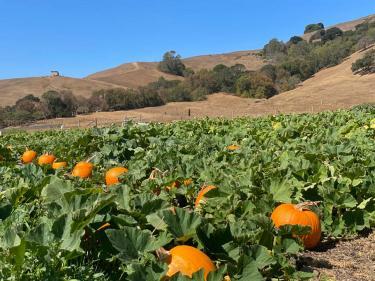 Grossi Family Farm Pumpkin Patch Novato Marin County