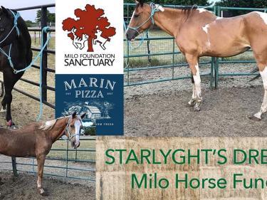 Milo Horse Fund