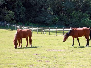 Morgan Horse Ranch Point Reyes