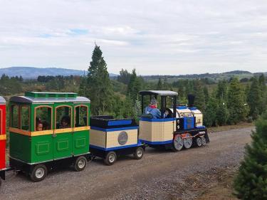 Reindeer Ridge Tree Farm train ride